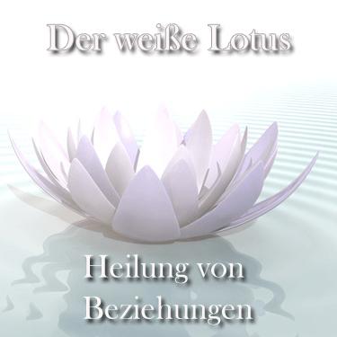 der_weiße_lotus_Kopie